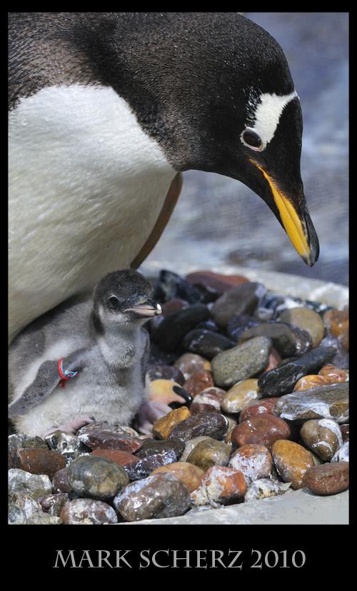Enclosed Parenthood