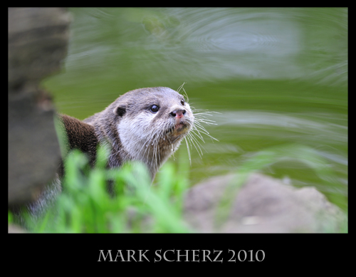 Otter framing