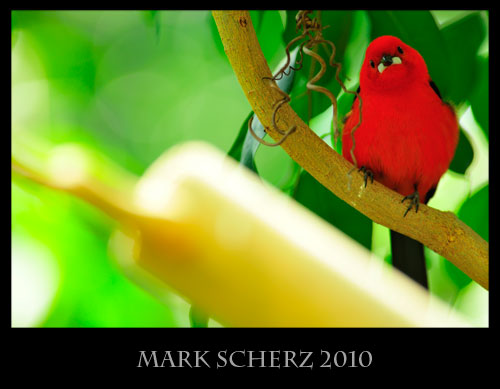 Bright Red Bird in Zurich Zoo