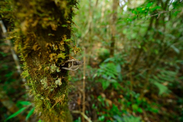 Fungi cling to a rainforest trunk