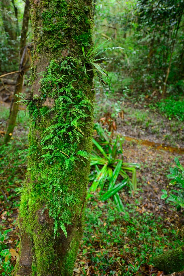 A fern-covered tree trunk
