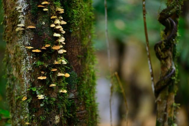 Small bracket fungi
