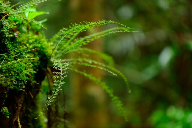 Fern filligree