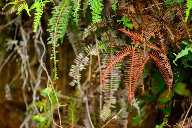 All shades of ferns
