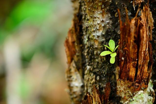 A tiny plant on a tree fern's trunk