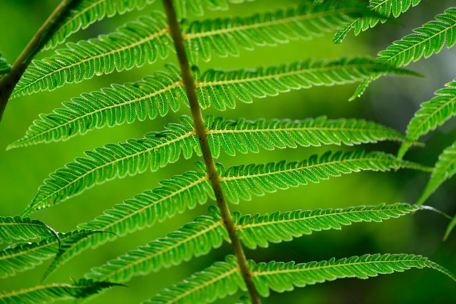 Ferns from below