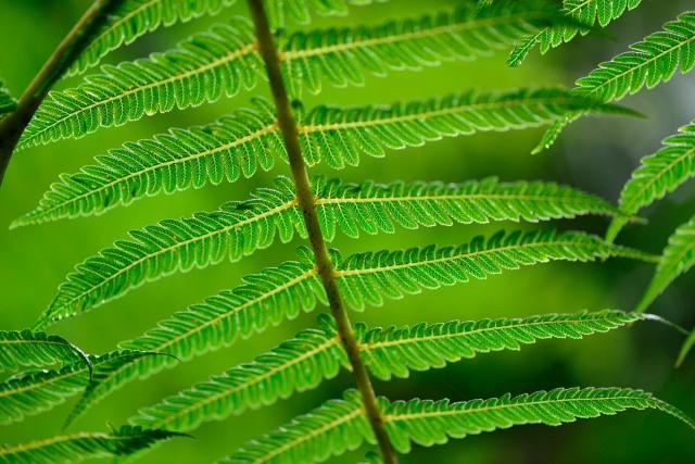 Ferns from below
