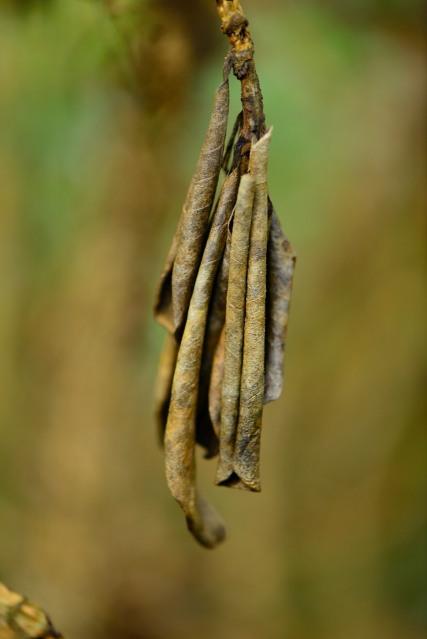 Dead leaf cluster