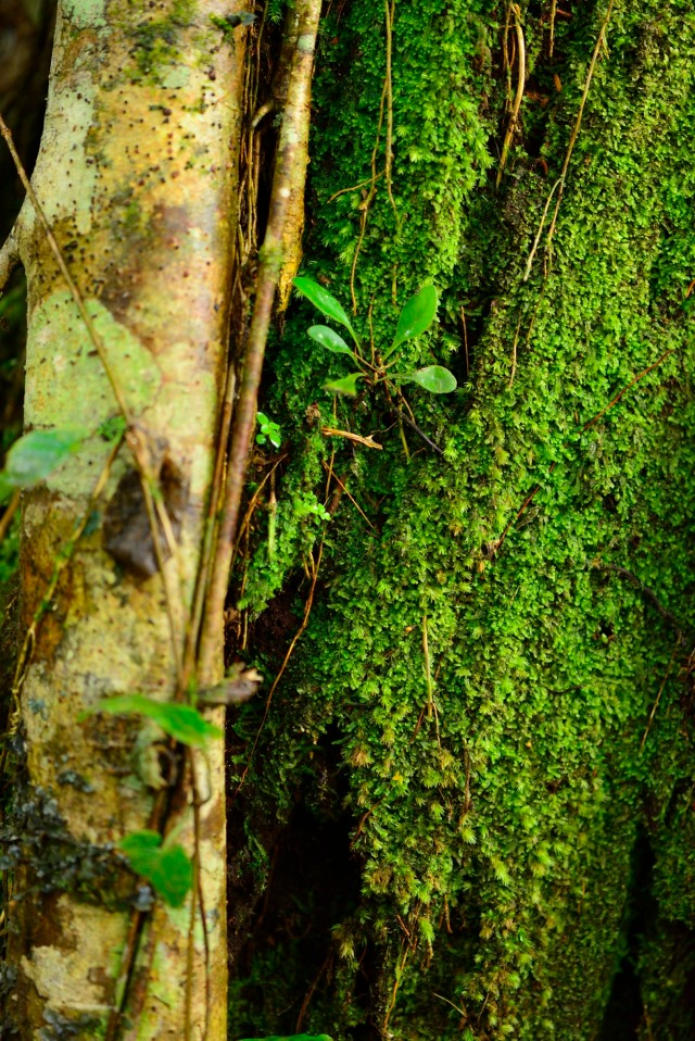 Contrast of wood and moss