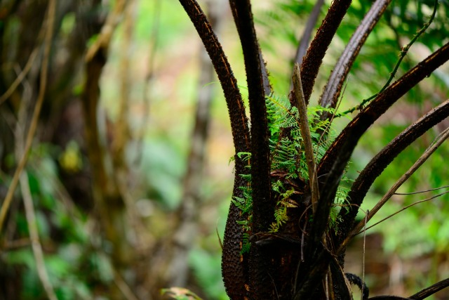 The base of a tree fern