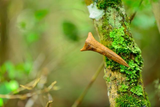 Leaf on branch