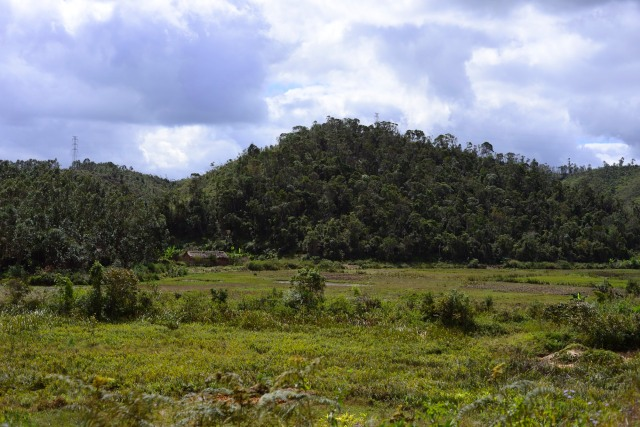 Rice paddies now lie where forest once stood.