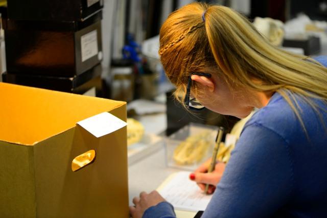 Emily Cataloguing