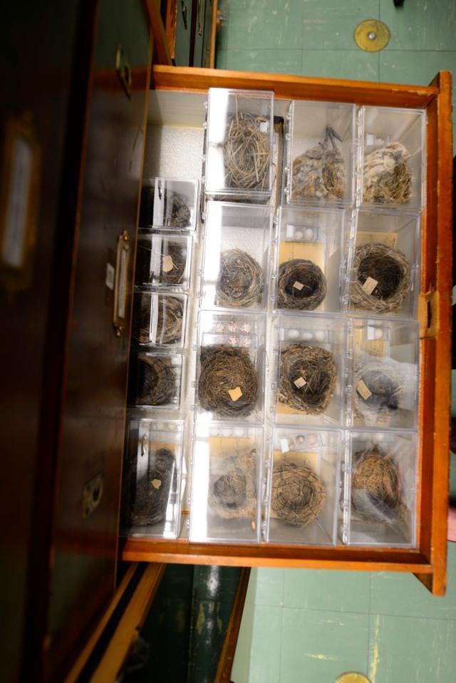 Passerine Nests