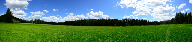 A spectacular meadow in the middle of the forest on the Idaho-Montana border.